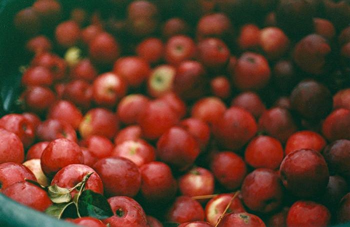 jedz jabłka na złośc putinowi