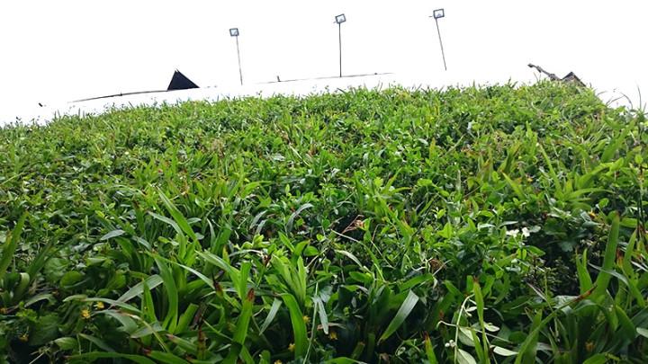 Kropla Beskidu + roślinny outdoor 4