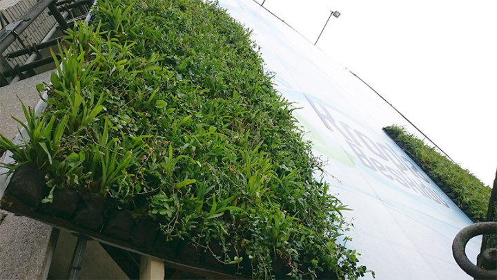 Kropla Beskidu + roślinny outdoor 5