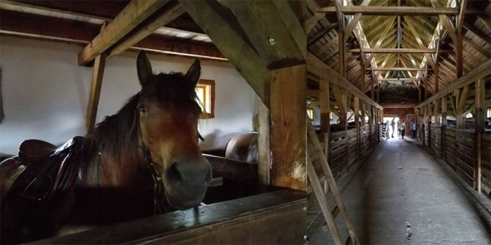 konie huculskie 3