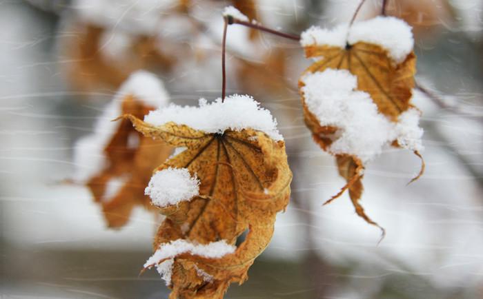 jak przeżyć zimę
