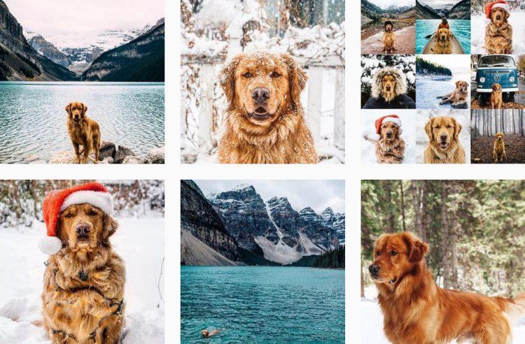 aspen-th-mountain-pup