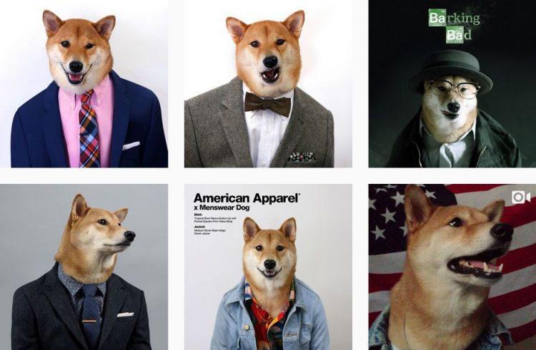 menswear-dog