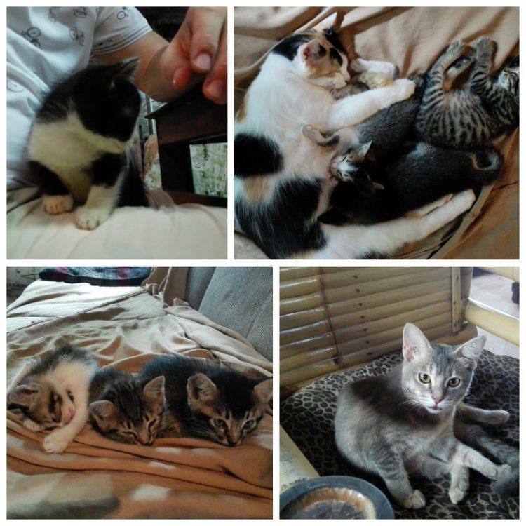 tajlandia-bangkok-koty